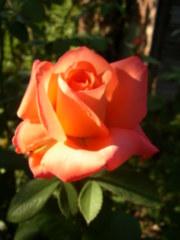 http://s1.imgdb.ru/2007-10/02/P1010010-JPG_tz8t2kq6.tmb.jpg