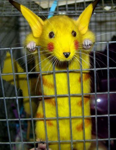 смешные картинки Pikachu-jpg_romtbztg
