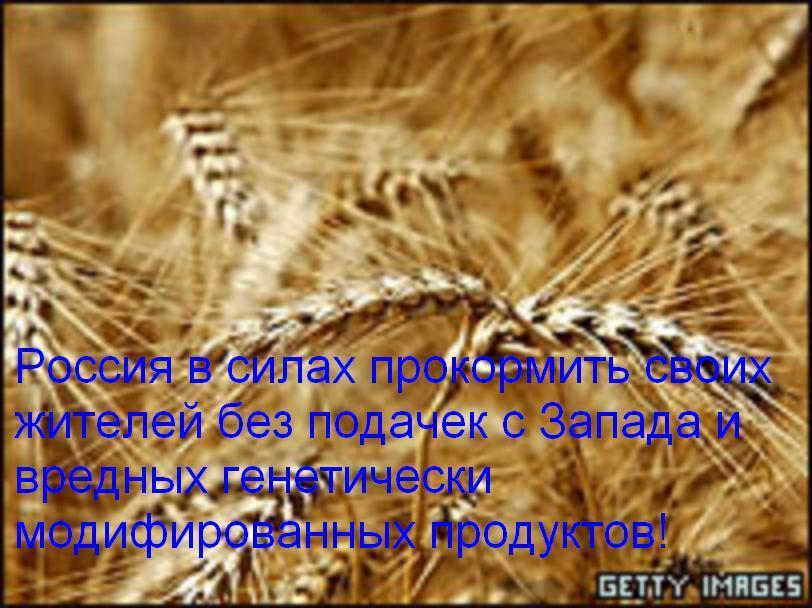 http://s1.imgdb.ru/2007-10/31/-43994675-wheat2_qsabyegz.jpg